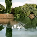 Volksgarten (1960er Jahre) - Teich mit Schwänen und Rondell.